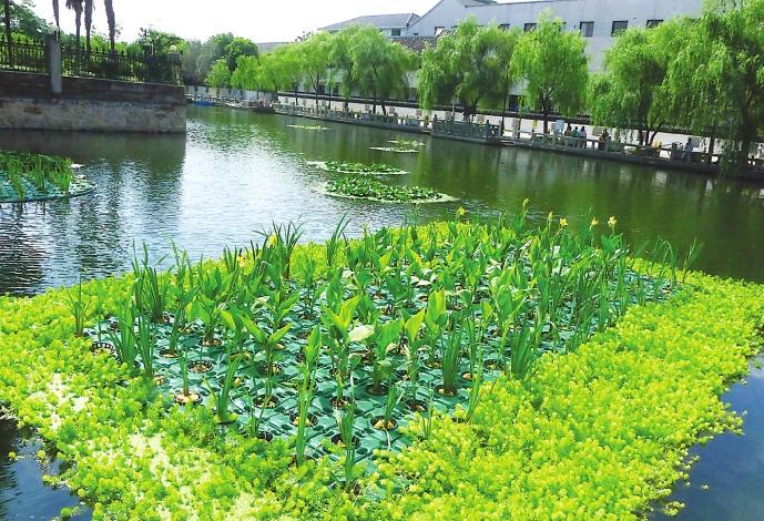 自去年8月份以来,我市水利部门依照清淤、截污、活水、保洁八字方针,对沧浪亭河进行综合整治,修复了其水生态系统,使其再现水景相依优美景观。今年又利用生态技术试行的水上绿化型净水生物浮岛,种植了花色艳丽的美人蕉,婀娜多姿的旱伞草等挺水植物,与睡莲等浅水性的浮水植物搭配组合,形成挺浮植物自然结合后美丽的水景景观。 记者 王建中摄