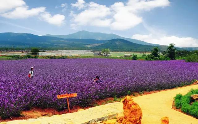 【紫海蓝山】多雨的日子,享受时光,听听那些心底的声音!