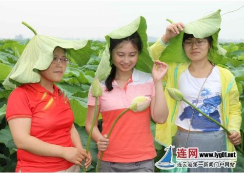 游客在灌云县伊芦山风景区千亩荷花田游玩