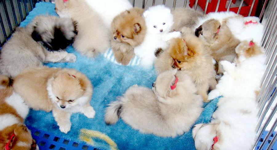 淮安最大宠物交易市场10月完工