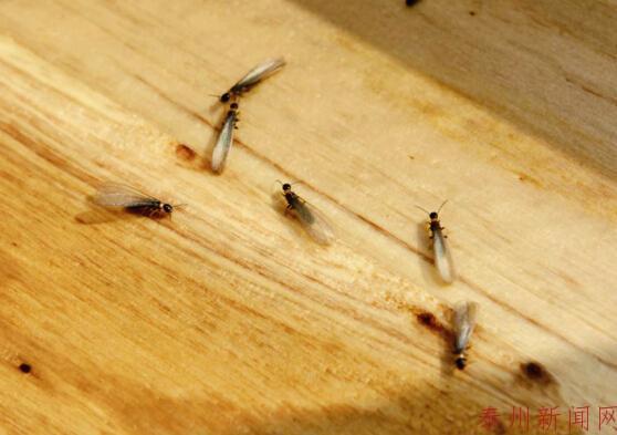地上爬的昆虫简笔画